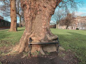 Dublin Hidden Gems The Hungry Tree, King's Inn Park, Dublin, Ireland