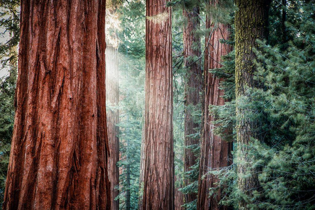 Redwoods National Park, California, United States